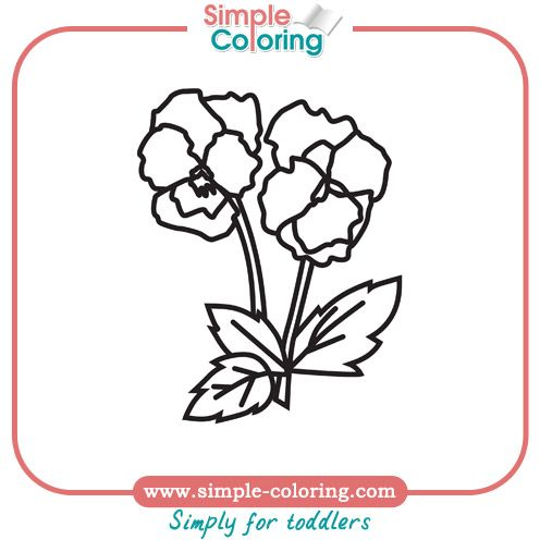 Pansy Flower Coloring Pages Pansies Flowers Colorful Flowers