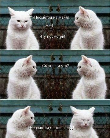 Смешные фото кошек с надписями   Неразлучные друзья ...