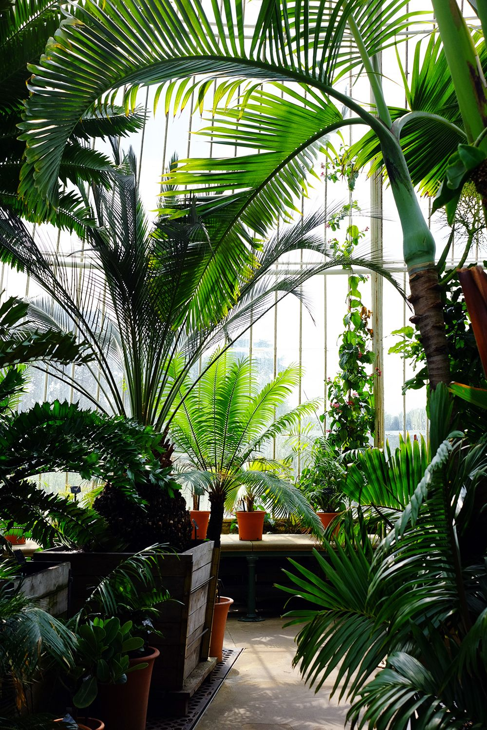 Victorian Conservatory At Kew Gardens London, #tropical