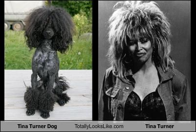 Tina Turner Dog Totally Looks Like Tina Turner With Images