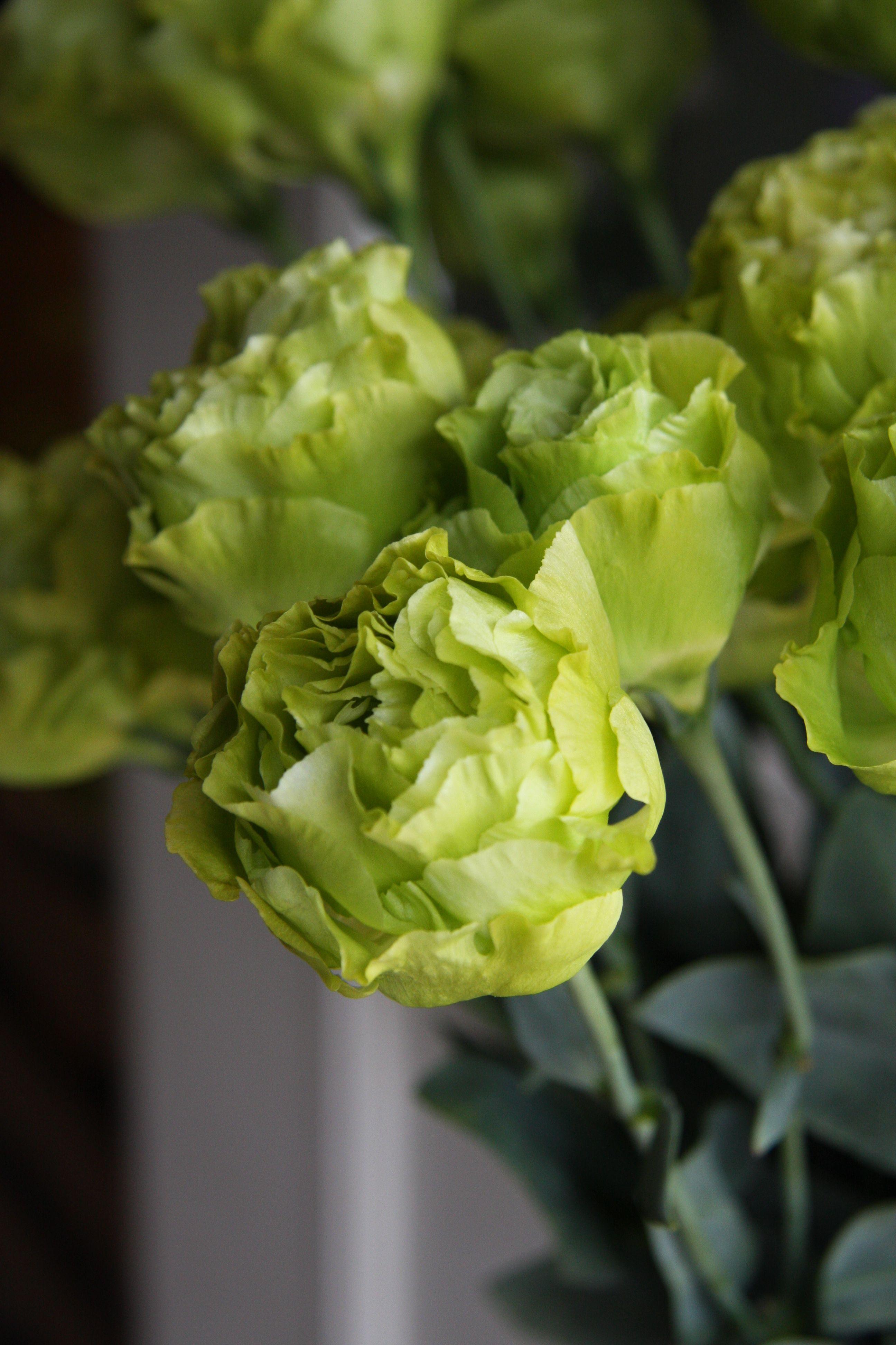 green lisianthus 39 matcha parfait 39 wedding green flowers pinterest flowers and gardens. Black Bedroom Furniture Sets. Home Design Ideas