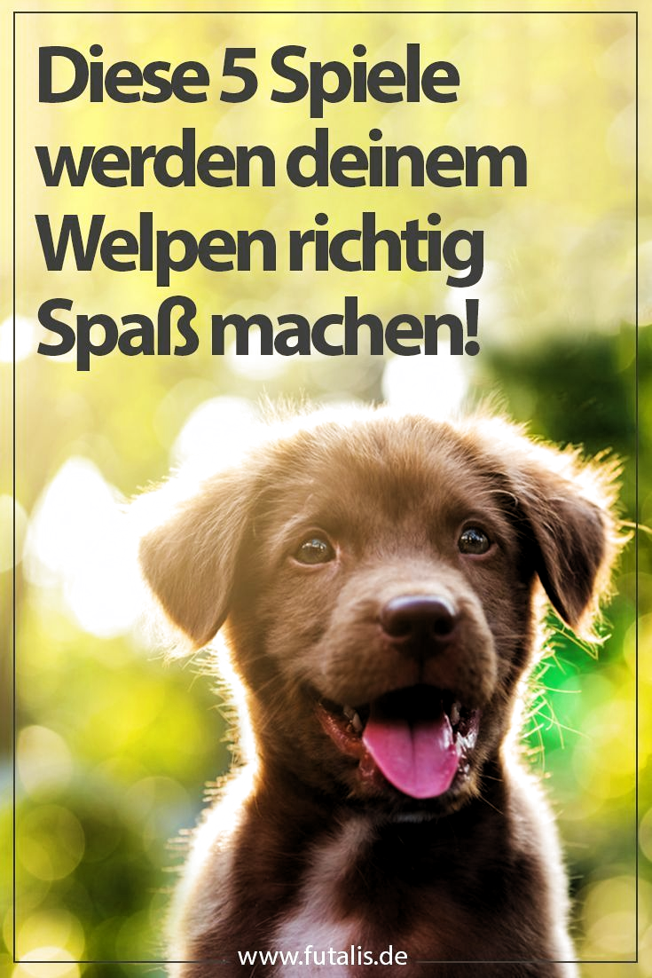 Pin On Hunde