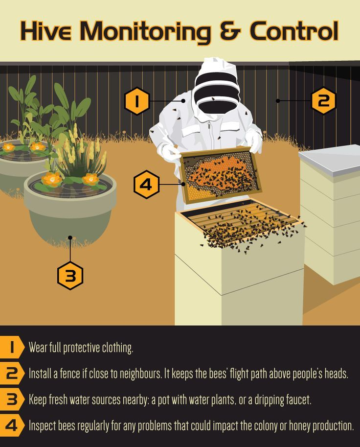 Merveilleux An Introduction To Beekeeping. Beekeeping For BeginnersBackyard ...