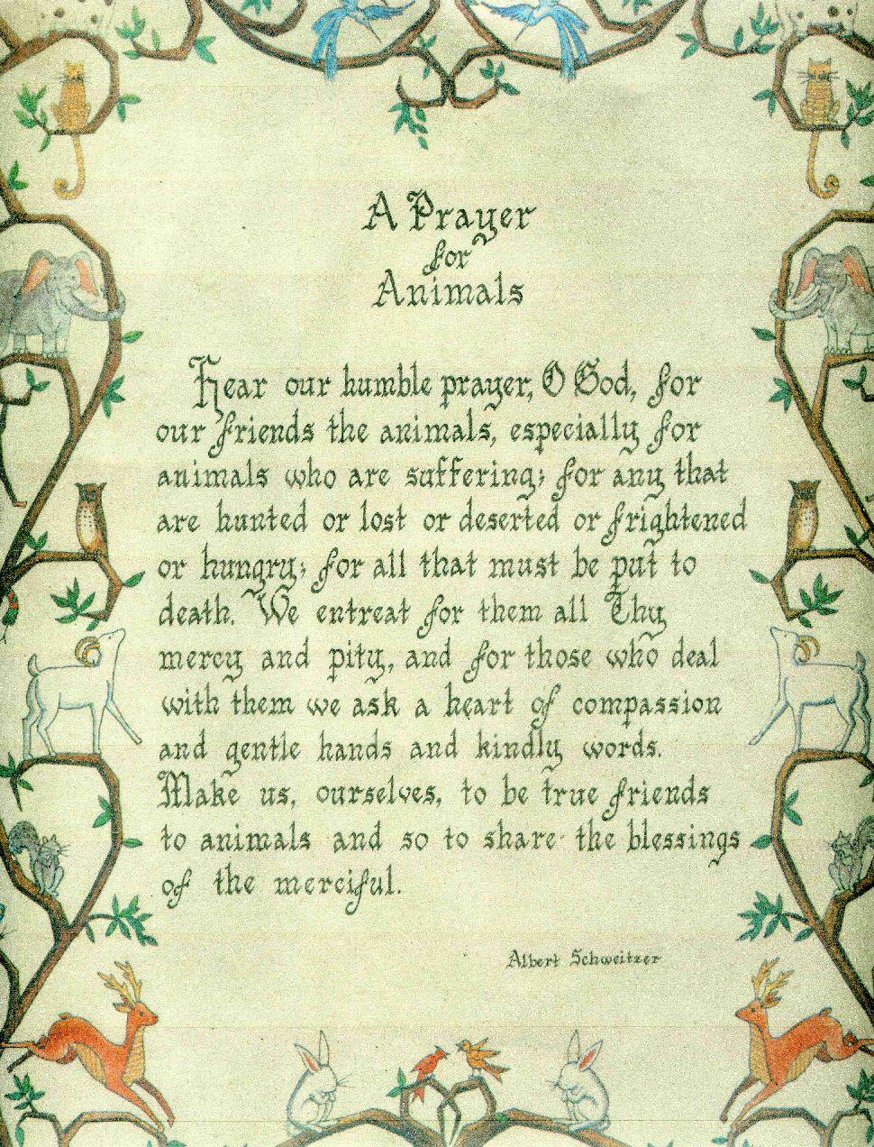 A Prayer for Animals Prayers, Pet condolences, Animals