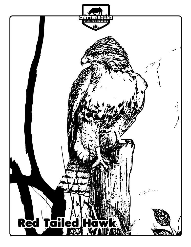 Pin By Critter Squad Wildlife Defende On Coloring Pages Bird