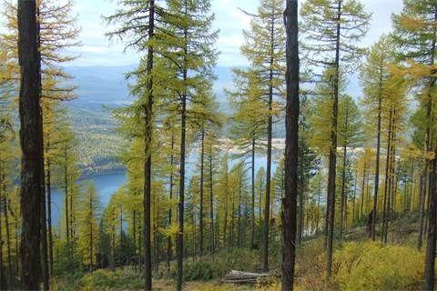 Land for Sale at 284 Elk Highlands 284 Elk Highlands dr Whitefish, Montana, 59937 United States