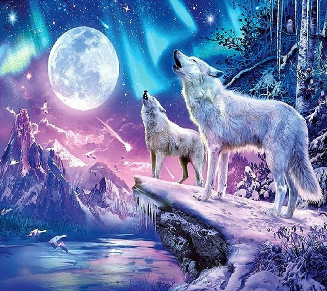 This Is A Pretty Drawing Wolf Photos Wolf Wallpaper Wolf Spirit Animal