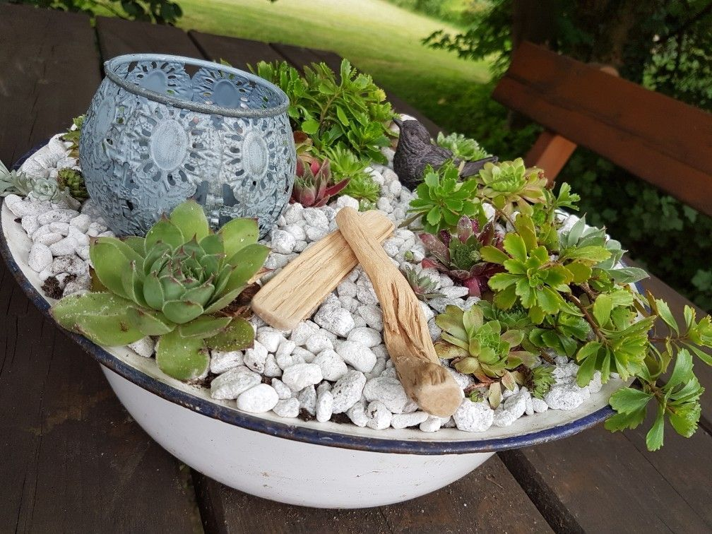 Emaille Sukkulenten Loveit From Metal Box To Flower Pot Whether As A Vase Or Plant Pot The In 2020 Succulents Diy Succulent Terrarium Succulents In Containers