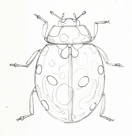 Photo of Step by Step Ladybird Watercolour illustration – Lizzie Harper