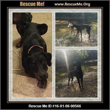 Sweet Home Doberman Resuce Enterprise Al Rescue Animals