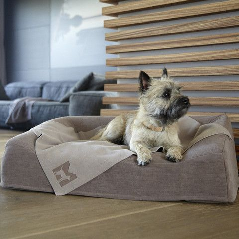 Designer Memory Foam Dog Sofa Dog Sofa Luxury Dog Dog Bed Luxury