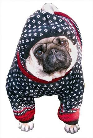 Winter Wooly Dog Sweater With Sleeves And Hood Dog Clothes