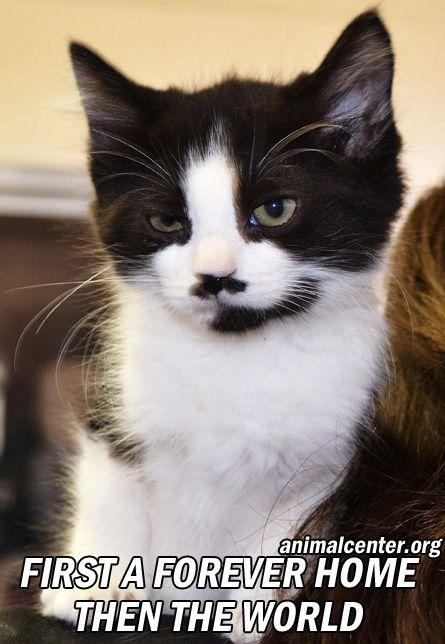 Adopt A Pet Cat Adoption Pet Adoption Animals