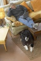 How to Get a Bad Smell Out of Leather Furniture | Dog pee ...