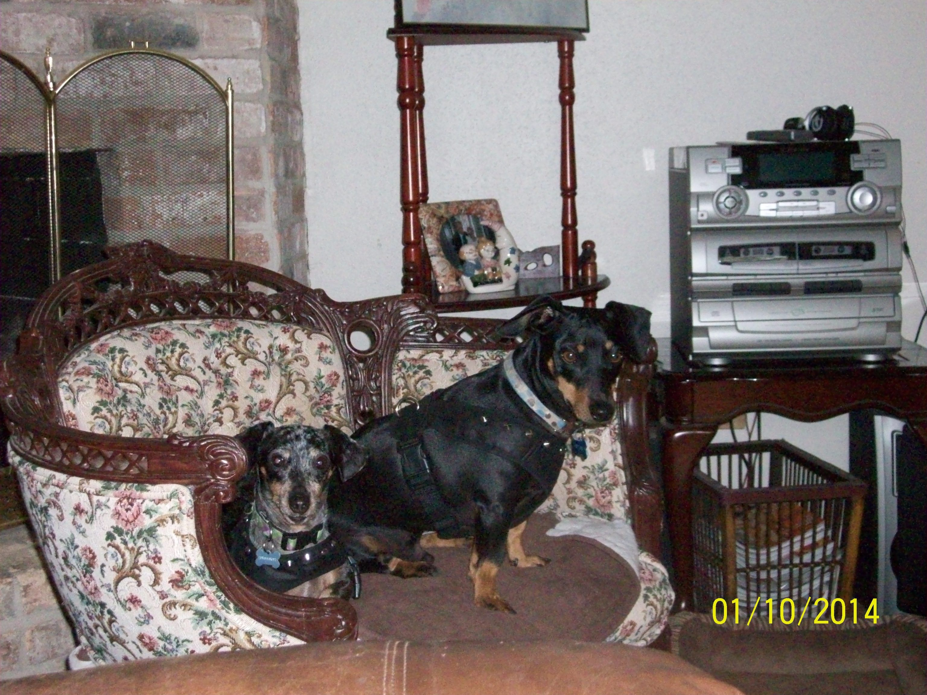 """Hershey and Snickers, our neighbors, """"sweet weenie dogs"""