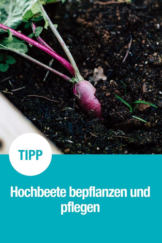 Hochbeete im Garten oder auf dem Balkon bieten viele Vorteile. Sie sind leicht zu pflegen, sehen gut aus und zum Naschen von selbstangebautem Gemüse sind sie einfach perfekt! Lest hier, wie ihr sie am besten bepflanzt und pflegt.