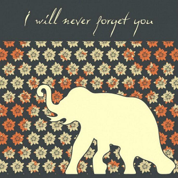 Who will make you never Elephant love, Elephant