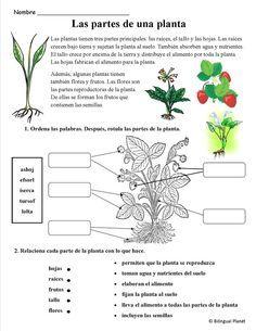 Las partes de una planta color por n meros pinterest for Raices ornamentales