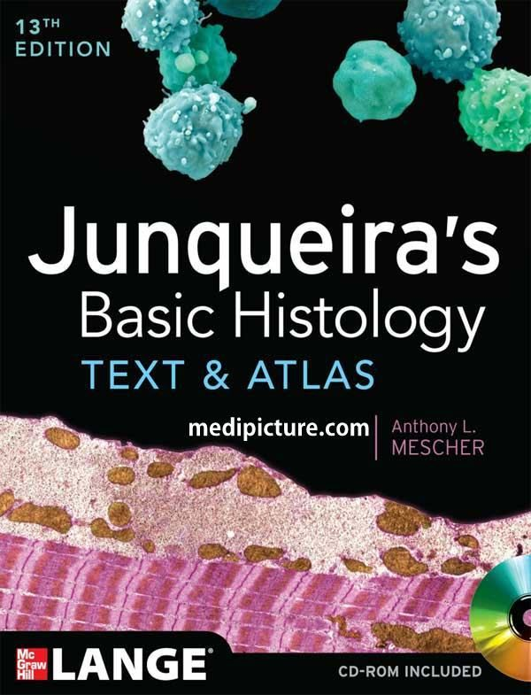 Junqueiras basic histology text and atlas pdf 13 th latest edition junqueiras basic histology text and atlas pdf 13 th latest edition free download fandeluxe Gallery