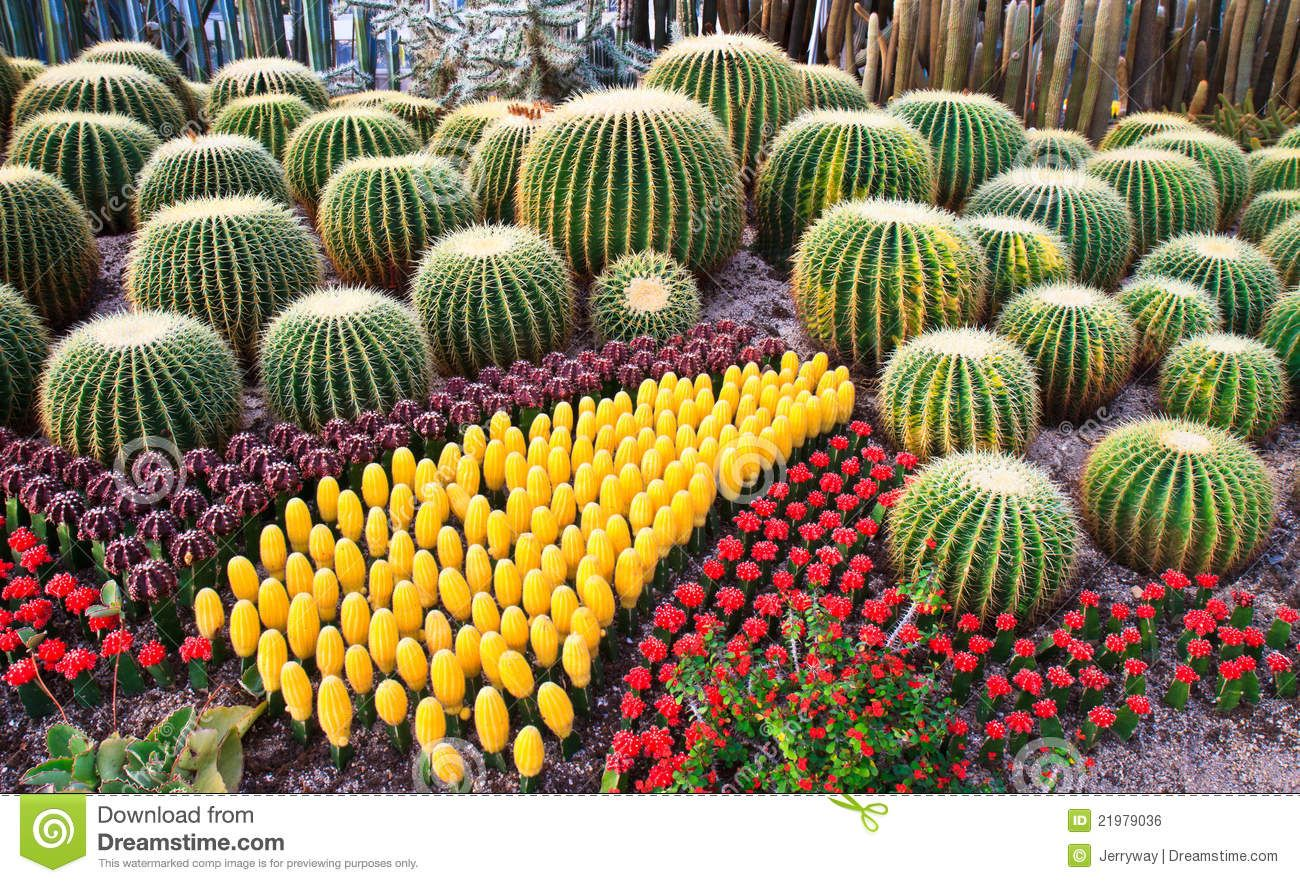 A variety of colorful cacti in Wanshi botanical garden in Xiamen