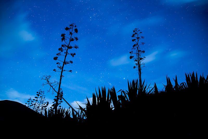 Contraluz, estrellas y pitas
