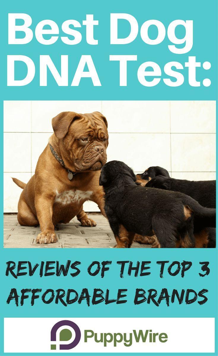 Best Dog Dna Test Reviews Of Top 3 Affordable Brands 2019 Dog