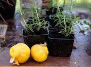 Spør om dyrking | Geitmyra