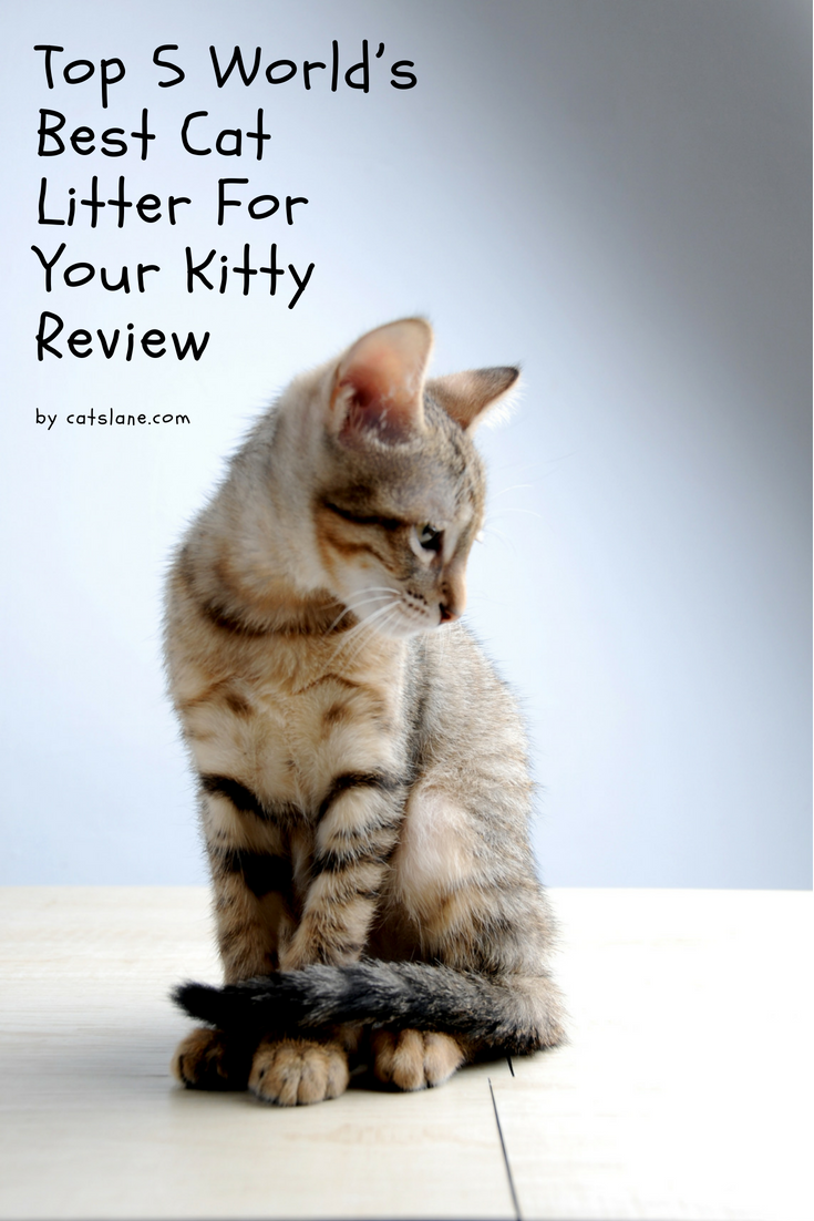 Top 5 World's Best Cat Litter For Your Kitty Review. Visit