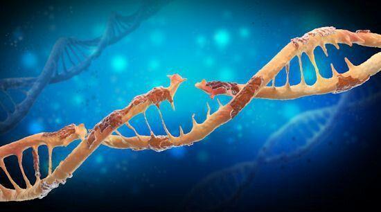 Problemas en la replicacion del ADN hace inmune a bacterias ante los antibioticos