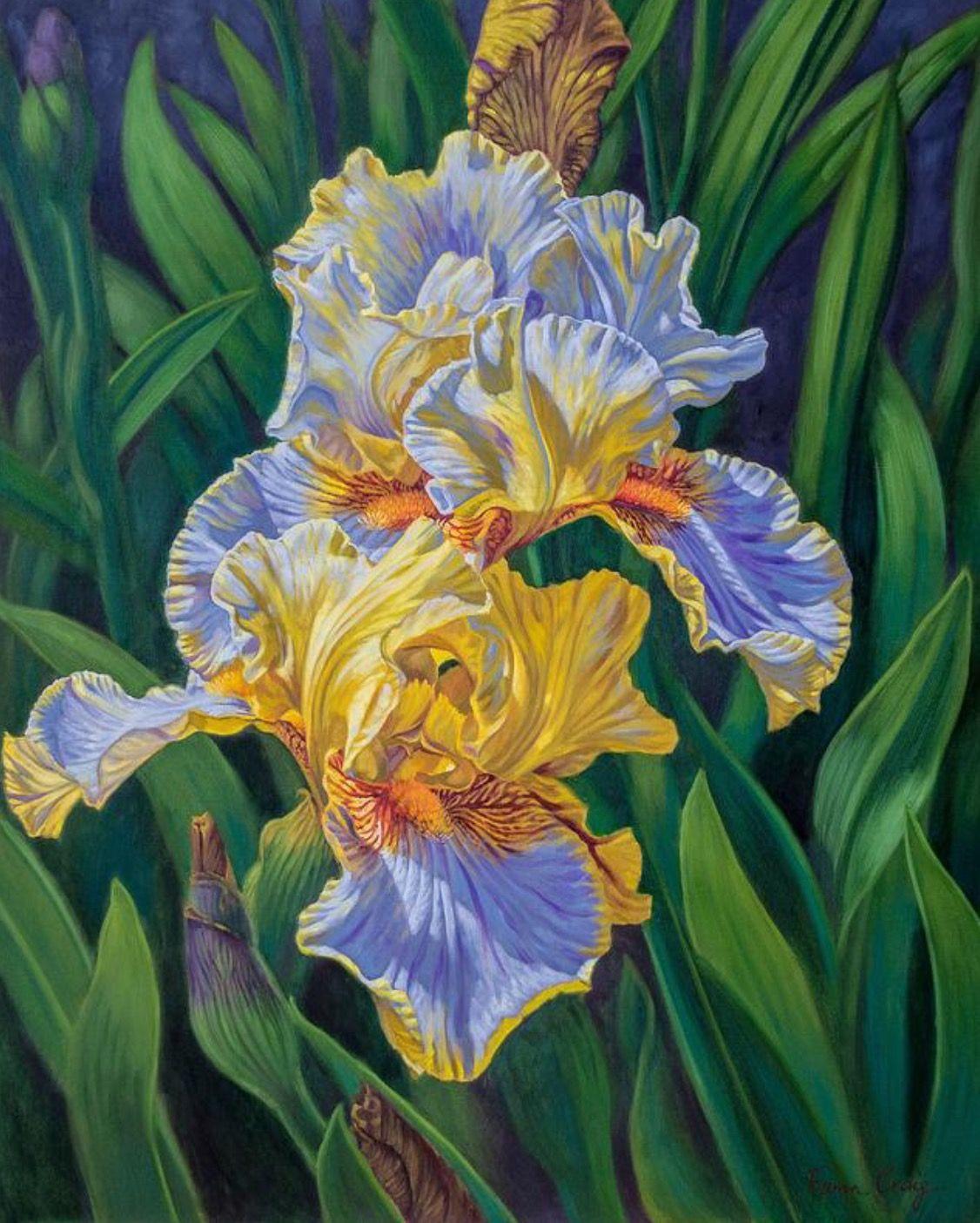 Fiona craig oil iris garden 3 iris art art flower