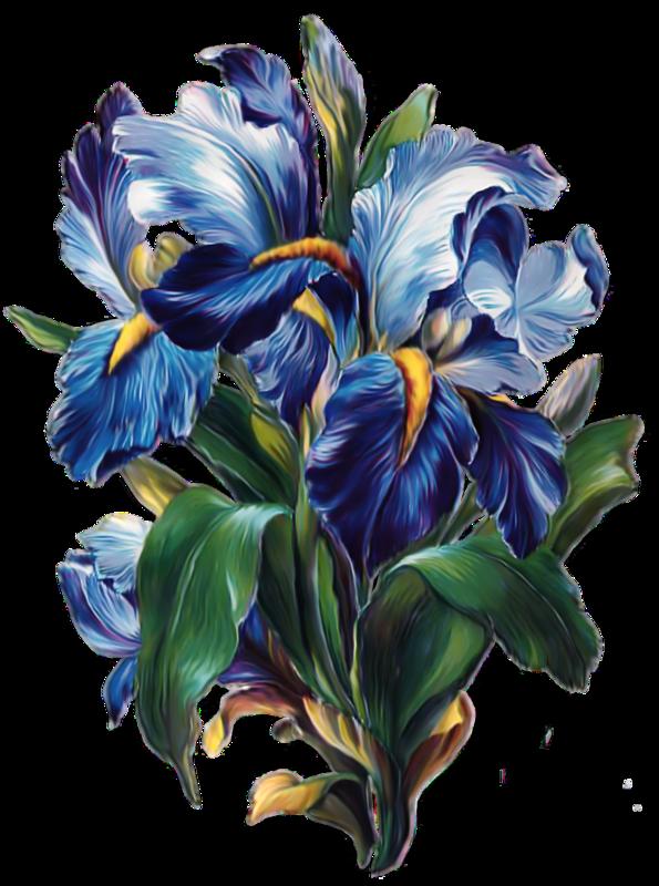 Красивые, ирисы открытки цветов