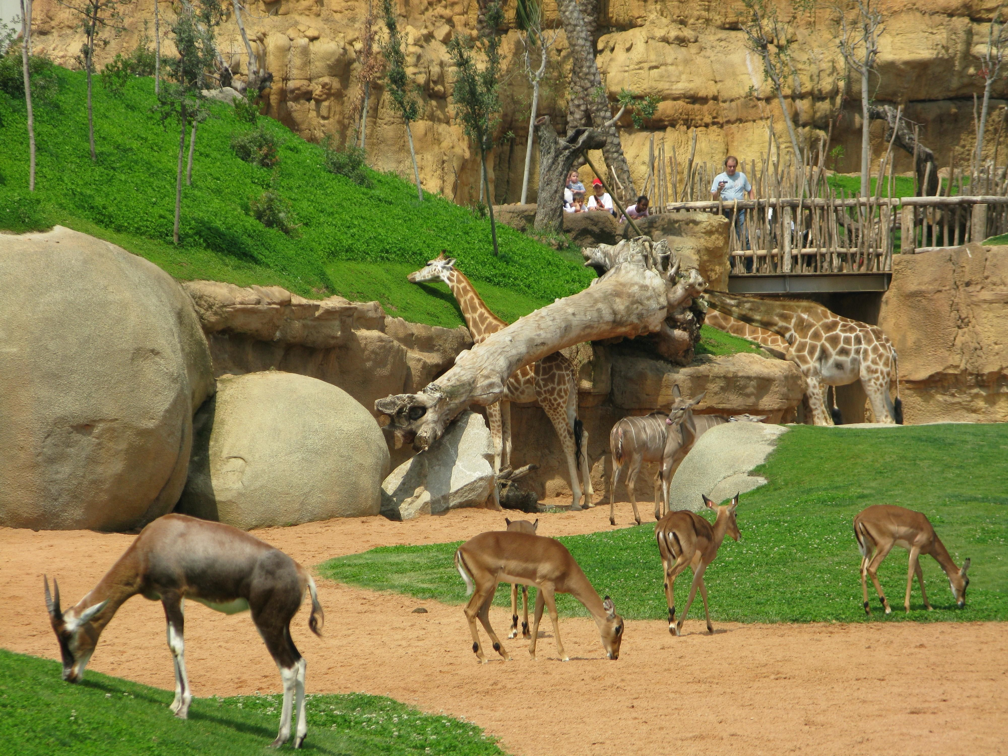 Bioparc valencia valencia spain find every worth - Bioparc de valencia ...