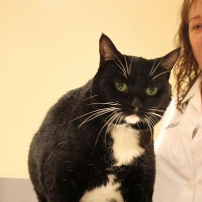 Upper Respiratory Infection In Cats Upper Respiratory Infection