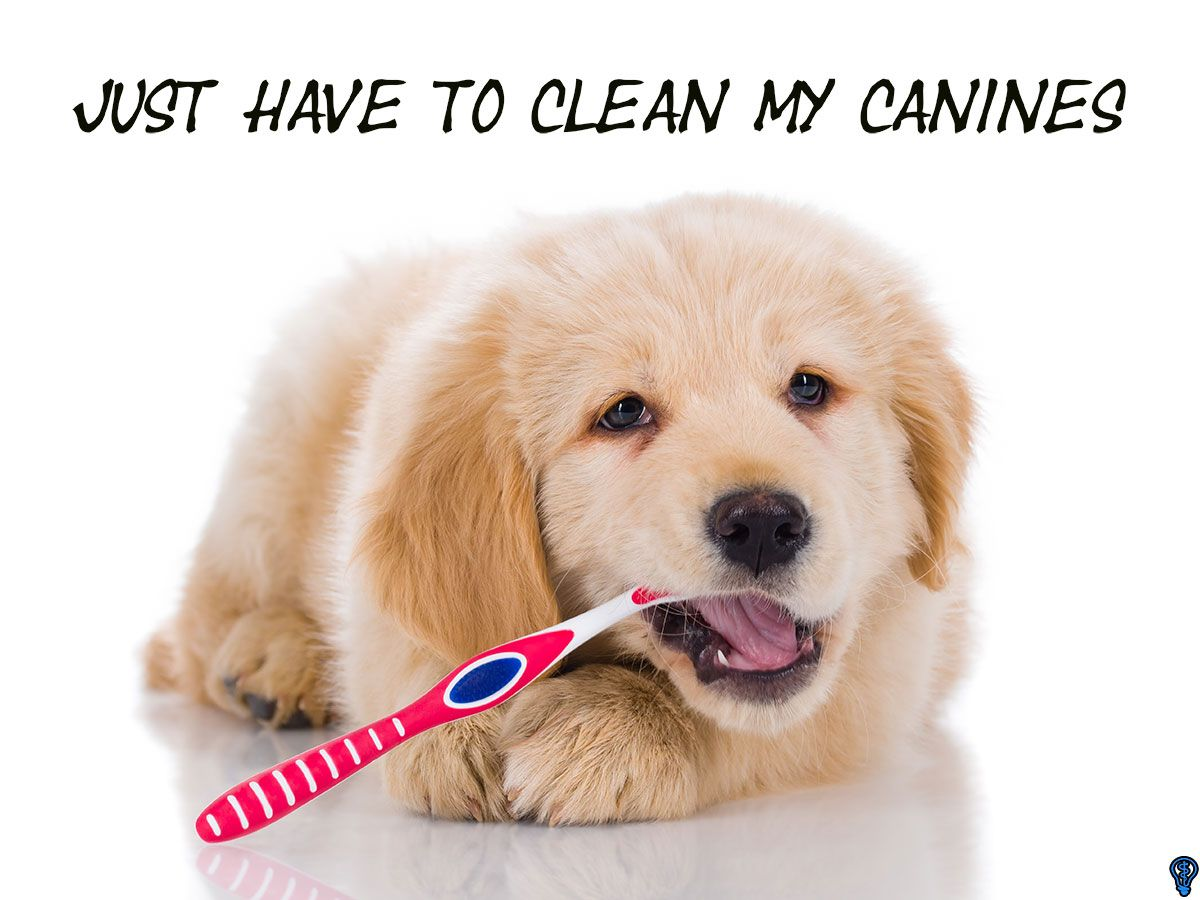 A chipped tooth needs immediate treatment dog toothpaste