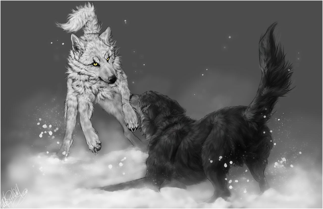 Wolf's Rain .Kiba vs. Tsume. by =WhiteSpiritWolf on