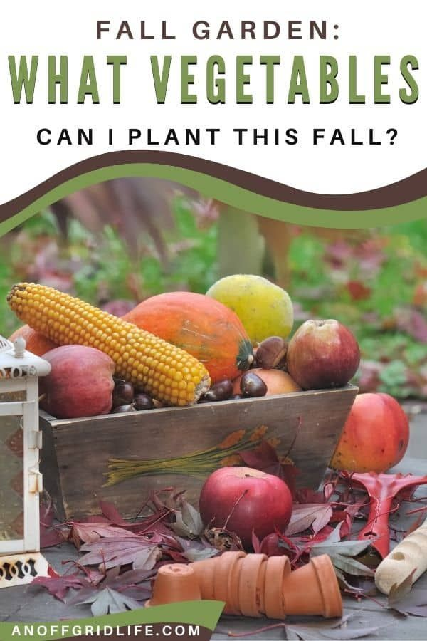Learn what vegetables to plant this fall to feed your family this winter. #fallgarden #fallvegetables