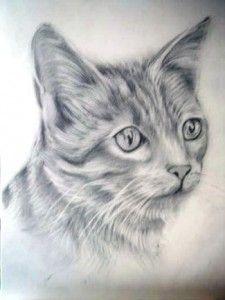 Dibujos A Lapiz De Gatos Dibujos A Lapiz Gatos Pinturas De Gato Dibujos De Gatos