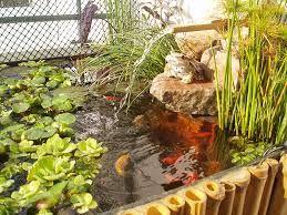 Como Hacer Estanques Para Tortugas De Agua Buscar Con Google - Como-construir-un-estanque-para-tortugas
