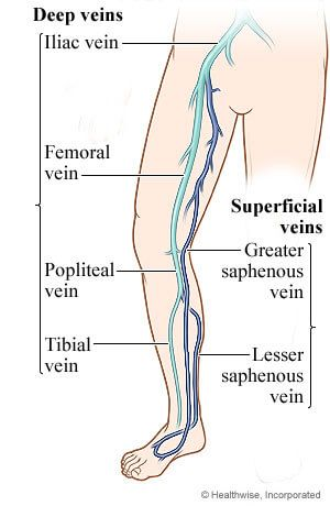deep veins of lower extremity