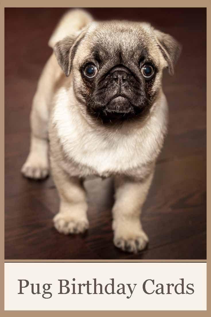 Cute Pug Birthday Cards Dog Lovers Pinterest