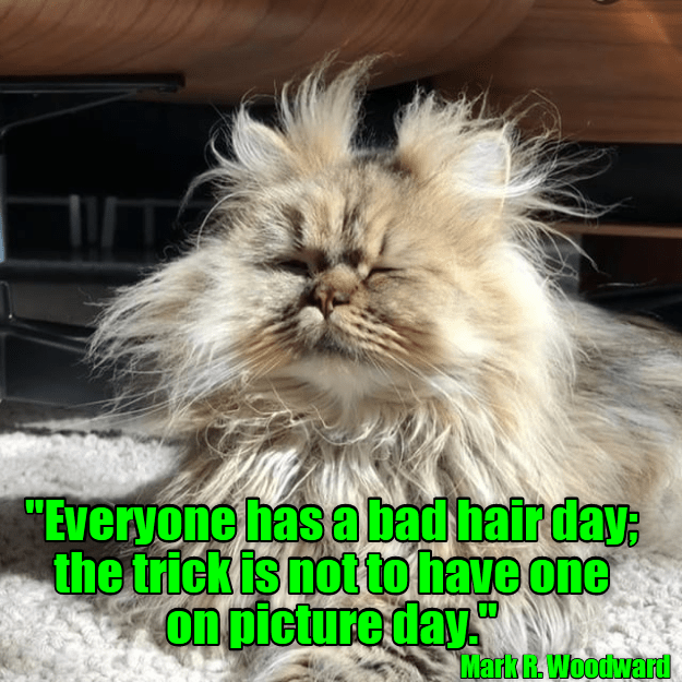 Bad Hair Day Cat And Dog Memes Funny Cat Photos Funny Animal Pictures