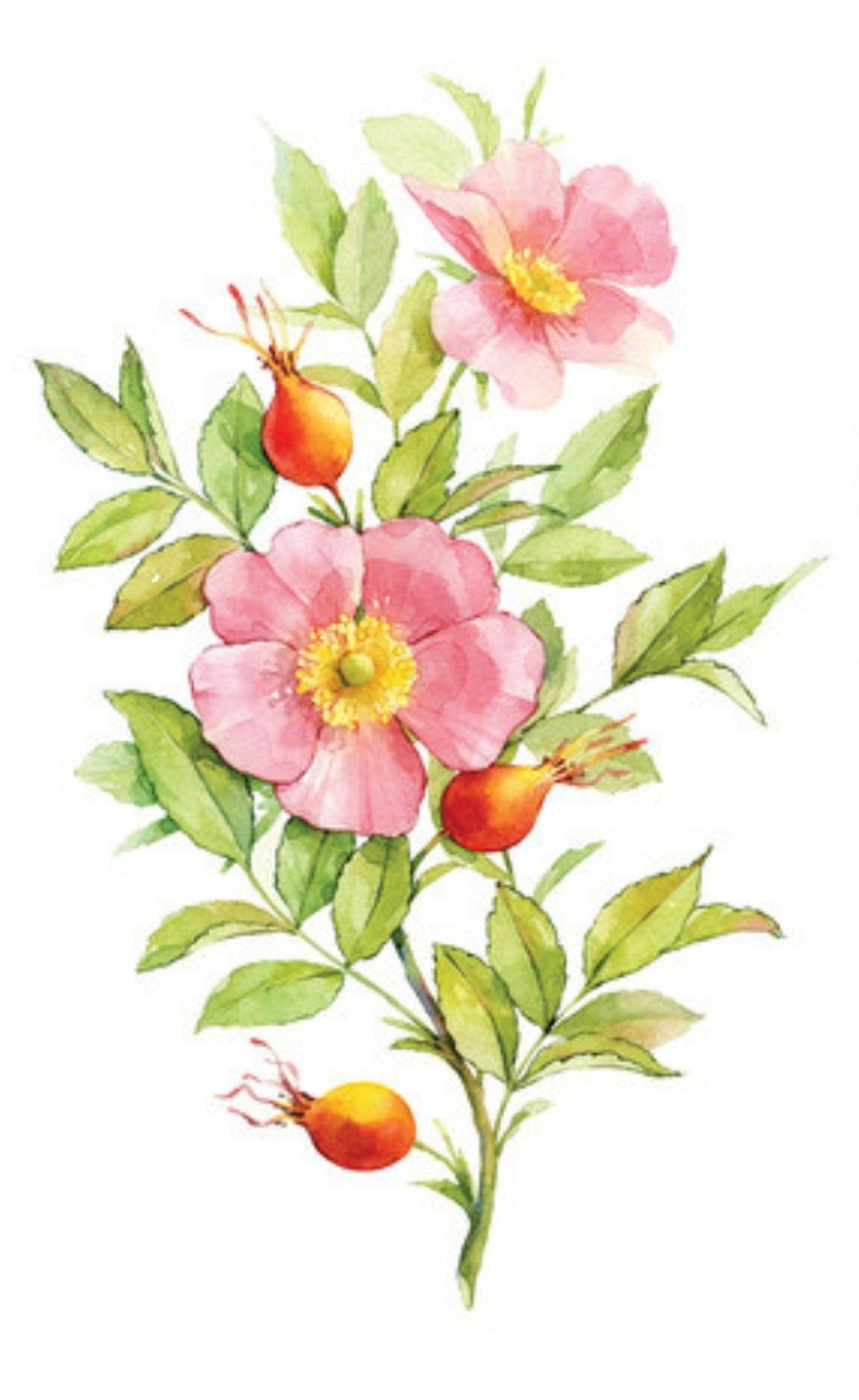 Pin by Vaughn Bell on Botanicals and Florals to Illustrate
