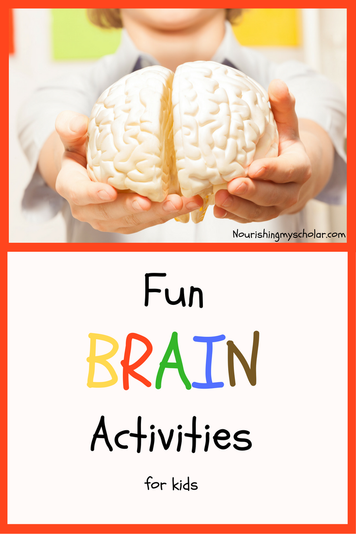 Fun Brain Activities for Kids | Homeschool Anatomy | Pinterest | Fun ...