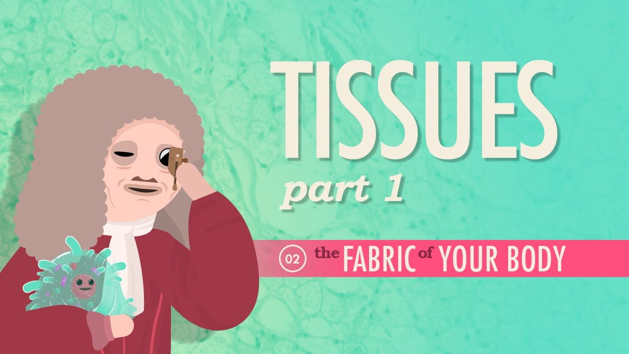 Tissues, Part 1: A&P #2 | Body systems, School and Science videos