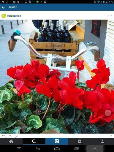 Plant & wine