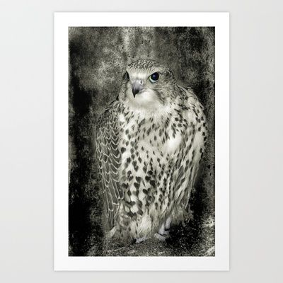Kestrel in B Art Print by F Photography and Digital Art - $18.00