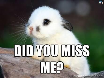 Did You Miss Me Cute Curious Bunny Meme Generator Do You