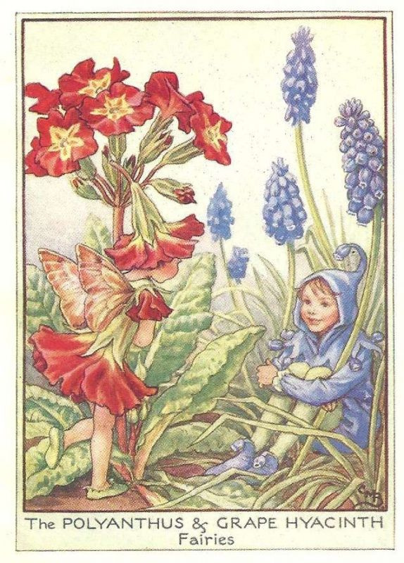 http://www.wellandantiquemaps.co.uk/lg_images/The-Polyanthus-and-Grape-Hyacinth-Fairies.jpg
