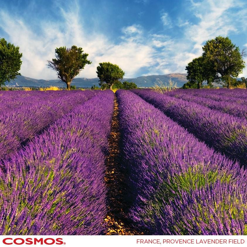 Let's Discover Provence. #CosmosTours http://social.cosmos.com/Kkt