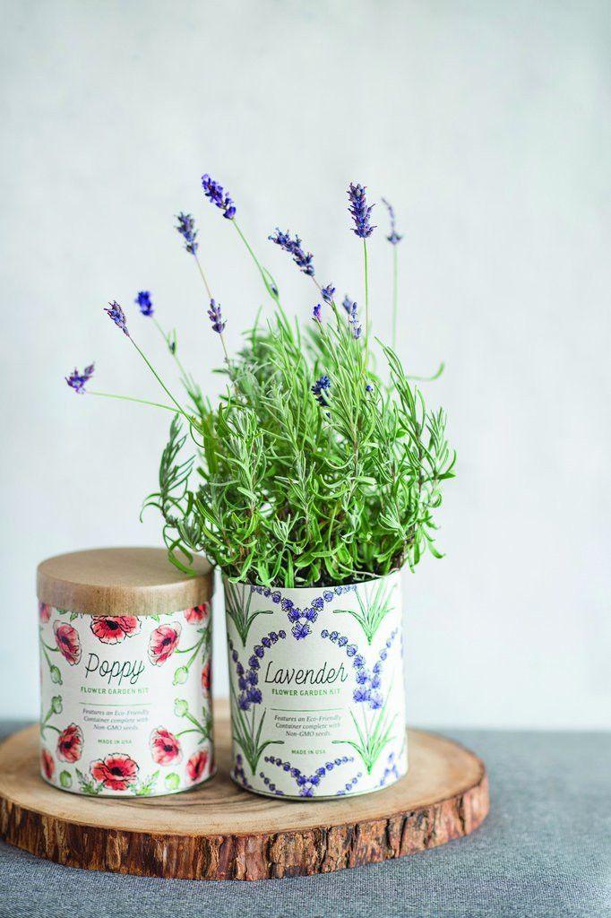 Indoor Grow Kit Lavender Grow kit, Indoor lavender